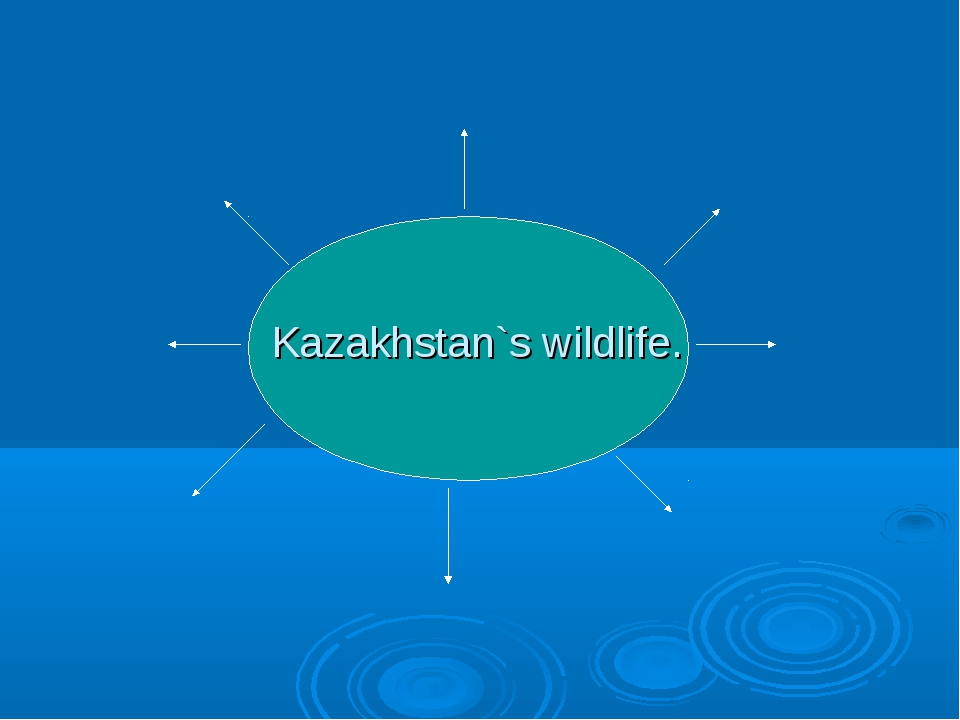 Kazakhstan`s wildlife.