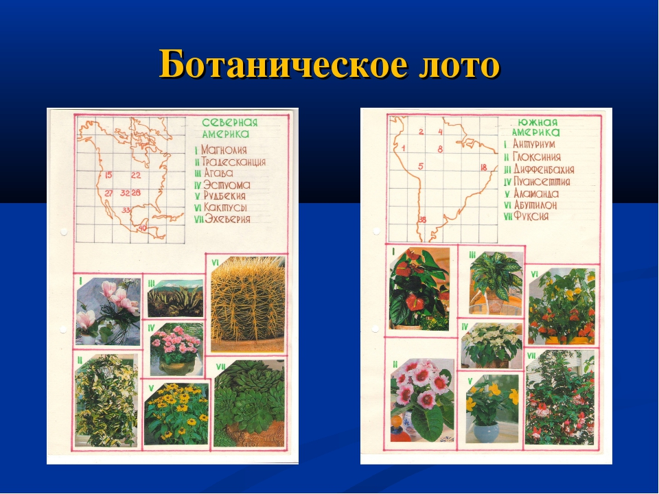 Ботаническое лото