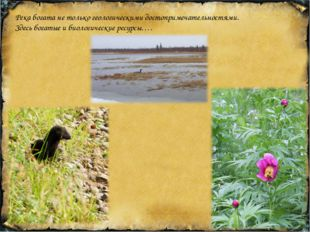 Река богата не только геологическими достопримечательностями. Здесь богатые и