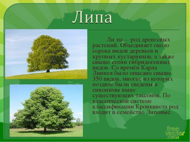 Ли́па— род древесных растений. Объединяет около сорока видов деревьев и круп...