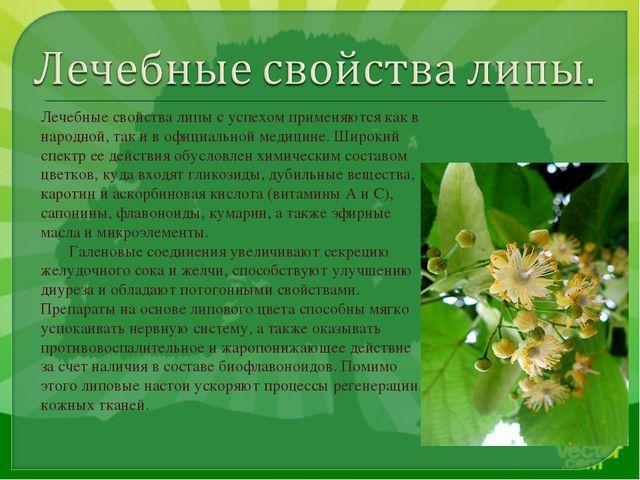 Лечебные свойства липы с успехом применяются как в народной, так и в официаль...