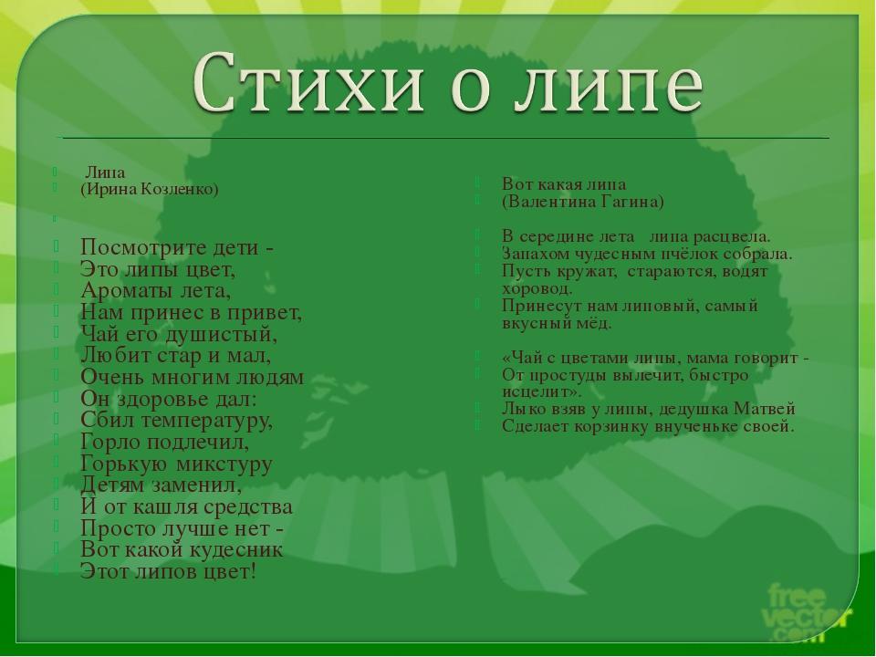 Липа (Ирина Козленко) Посмотрите дети - Это липы цвет, Ароматы лета, Нам при...