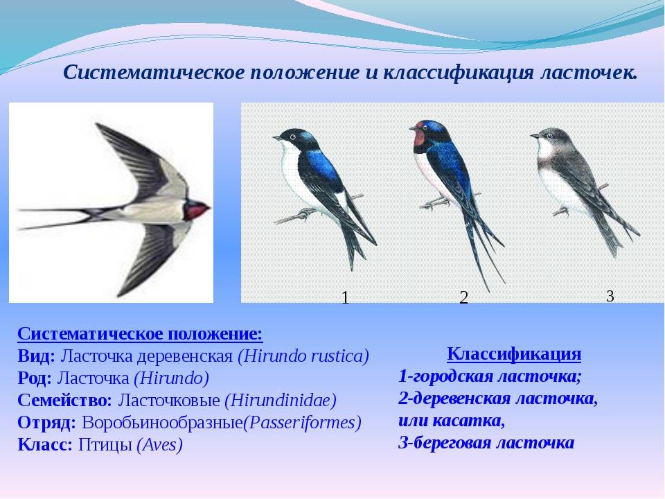 Систематическое положение и классификация ласточек. Систематическое положение...