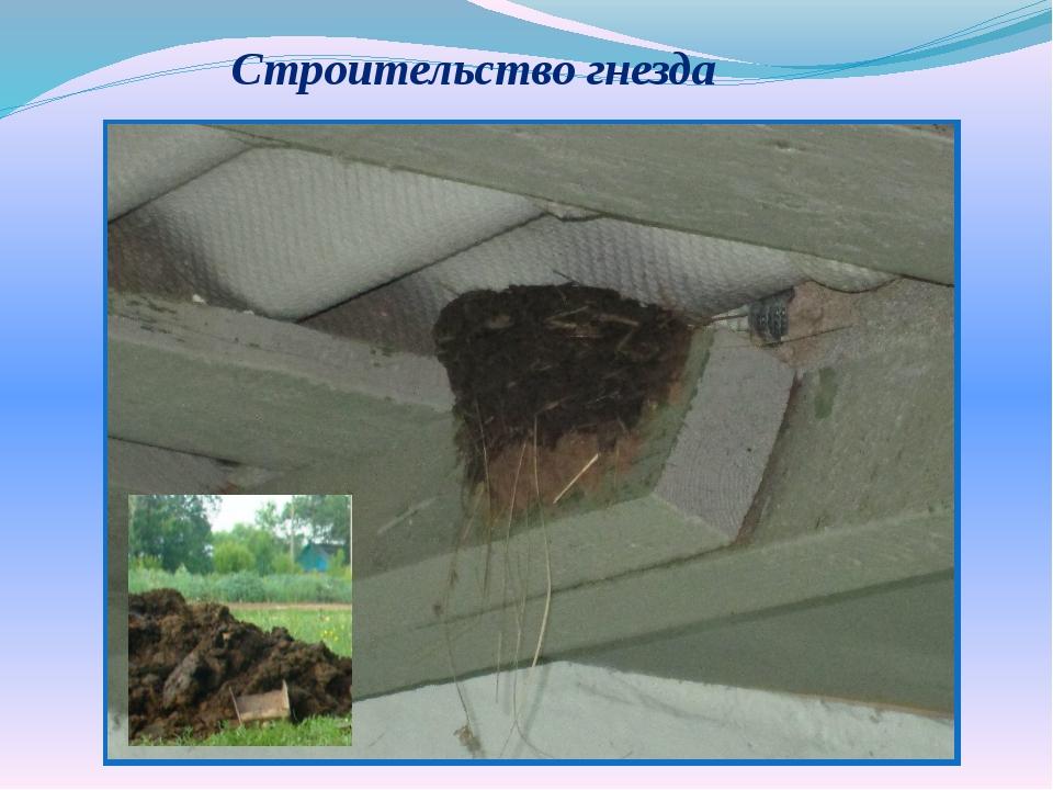 Строительство гнезда