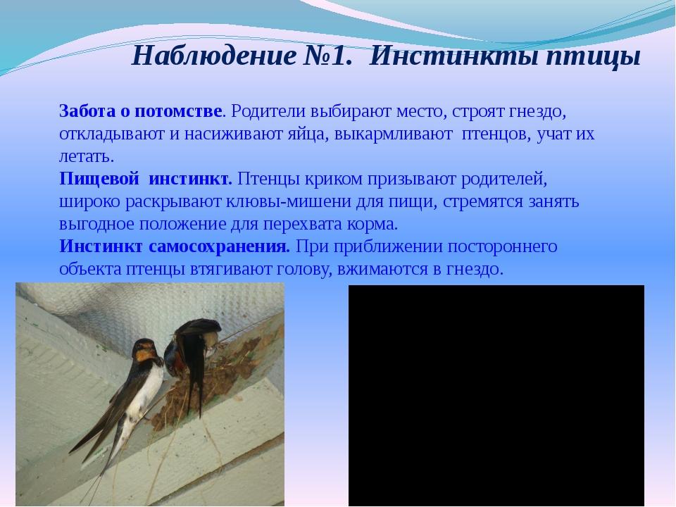 Наблюдение №1. Инстинкты птицы Забота о потомстве. Родители выбирают место,...