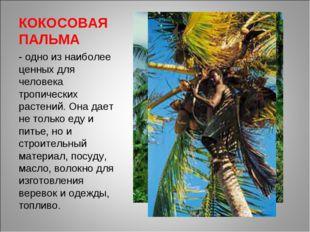 КОКОСОВАЯ ПАЛЬМА - одно из наиболее ценных для человека тропических растений.