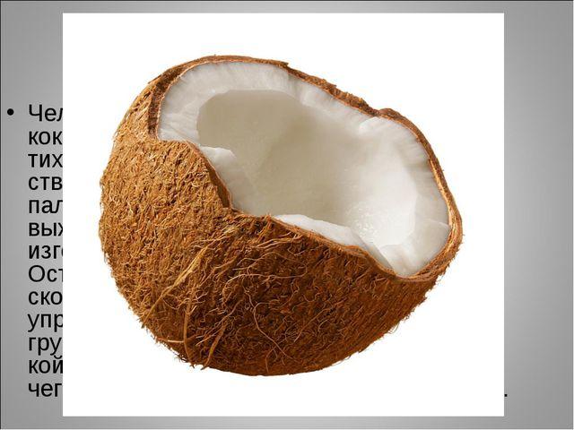 Кокосовая пальма Человек использует почти все части кокосовой пальмы. Туземцы...