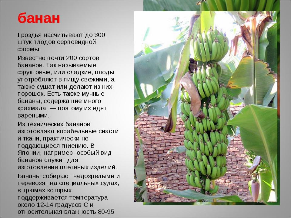 банан Гроздья насчитывают до 300 штук плодов серповидной формы! Известно почт...