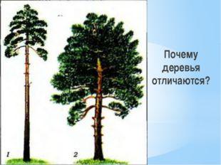 Почему деревья отличаются?
