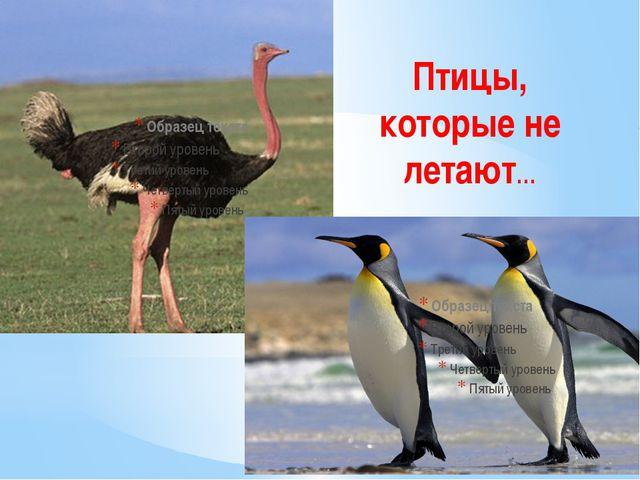 Птицы, которые не летают…