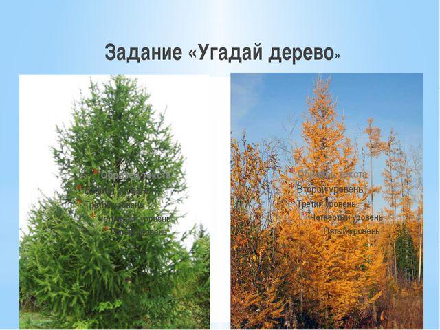 Задание «Угадай дерево»
