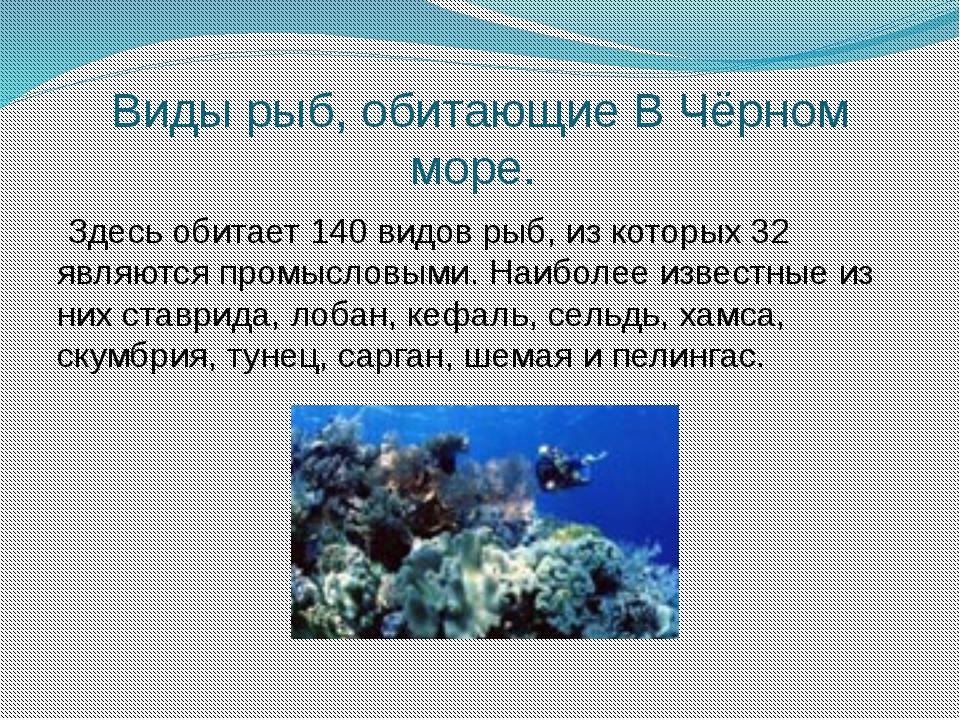 Виды рыб, обитающие В Чёрном море. Здесь обитает 140 видов рыб, из которых 32...