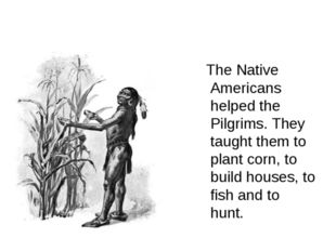 The Native Americans helped the Pilgrims. They taught them to plant corn, to
