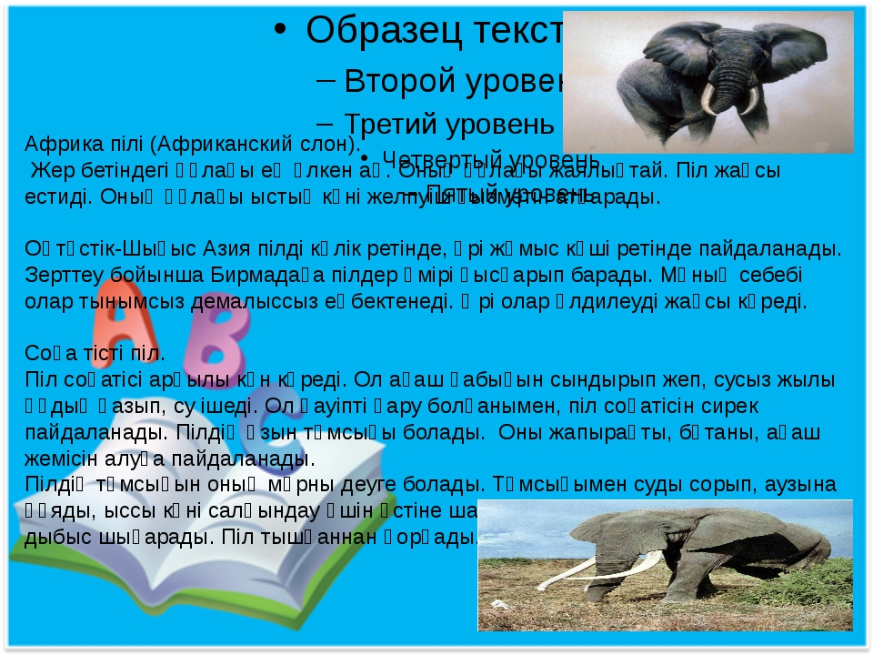 Африка пілі (Африканский слон). Жер бетіндегі құлағы ең үлкен аң. Оның құлағ...
