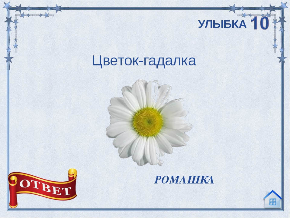 Цветок-гадалка  РОМАШКА УЛЫБКА
