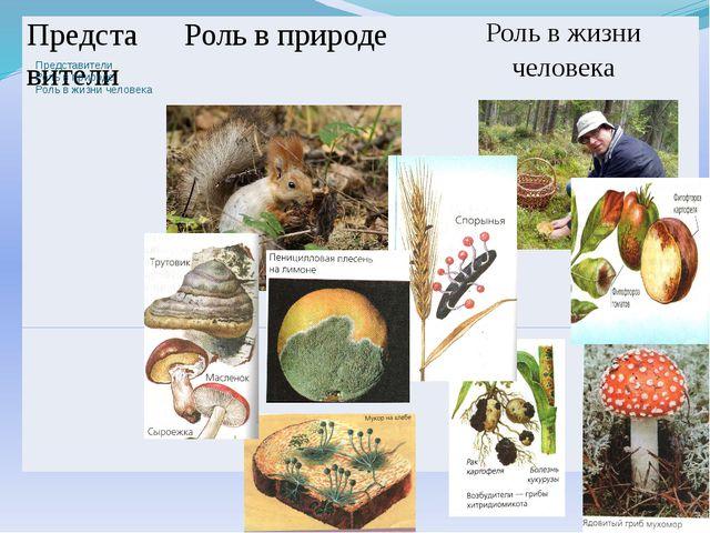 Представители Роль в природе Роль в жизни человека    Представители Роль в...