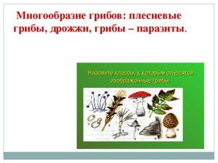 Многообразие грибов: плесневые грибы, дрожжи, грибы – паразиты.