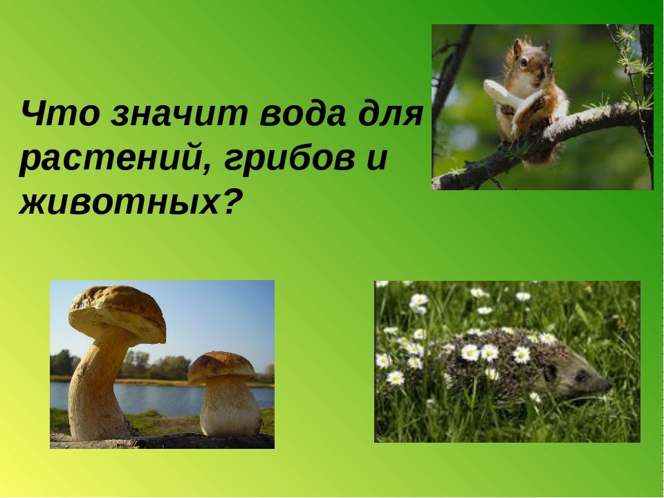 Что значит вода для растений, грибов и животных?