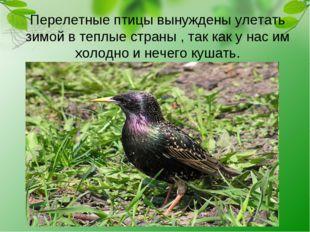 Перелетные птицы вынуждены улетать зимой в теплые страны , так как у нас им х