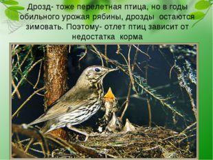 Дрозд- тоже перелетная птица, но в годы обильного урожая рябины, дрозды остаю