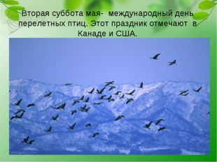 Вторая суббота мая- международный день перелетных птиц. Этот праздник отмечаю