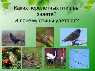 Каких перелётных птиц вы знаете? И почему птицы улетают?