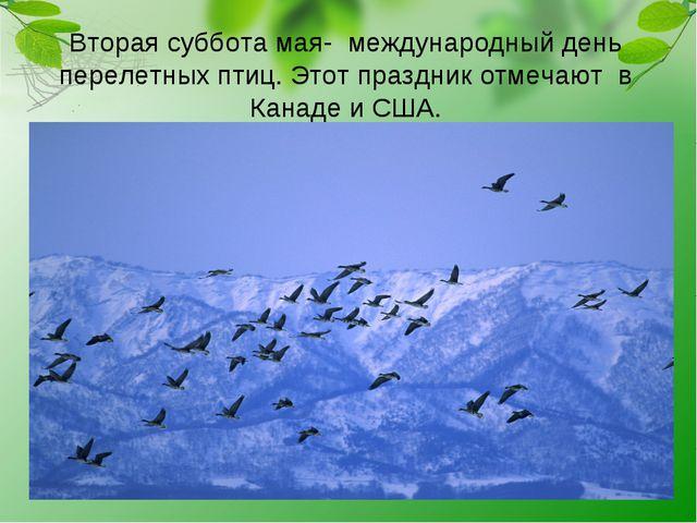 Вторая суббота мая- международный день перелетных птиц. Этот праздник отмечаю...