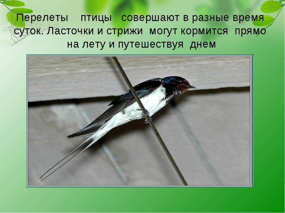 Перелеты птицы совершают в разные время суток. Ласточки и стрижи могут кормит...