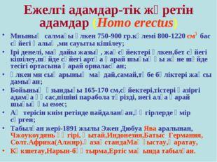 Ежелгі адамдар-тік жүретін адамдар (Homo erectus) Миының салмағы үлкен 750-90