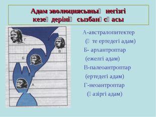 Адам эволюциясының негізгі кезеңдерінің сызбанұсқасы А-австралопитектер (Өте