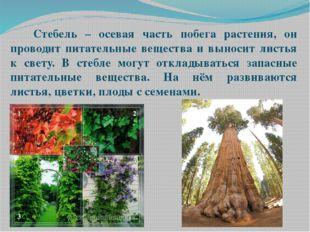 Стебель – осевая часть побега растения, он проводит питательные вещества и в