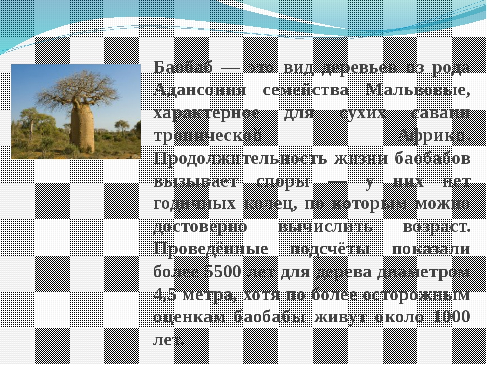 Баобаб — это вид деревьев из рода Адансония семейства Мальвовые, характерное...