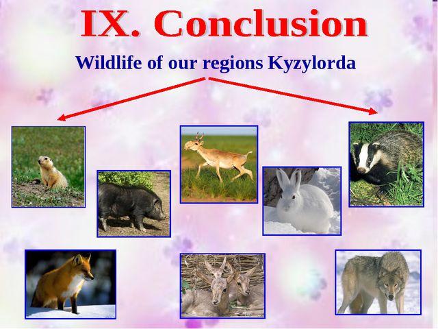 Wildlife of our regions Kyzylorda