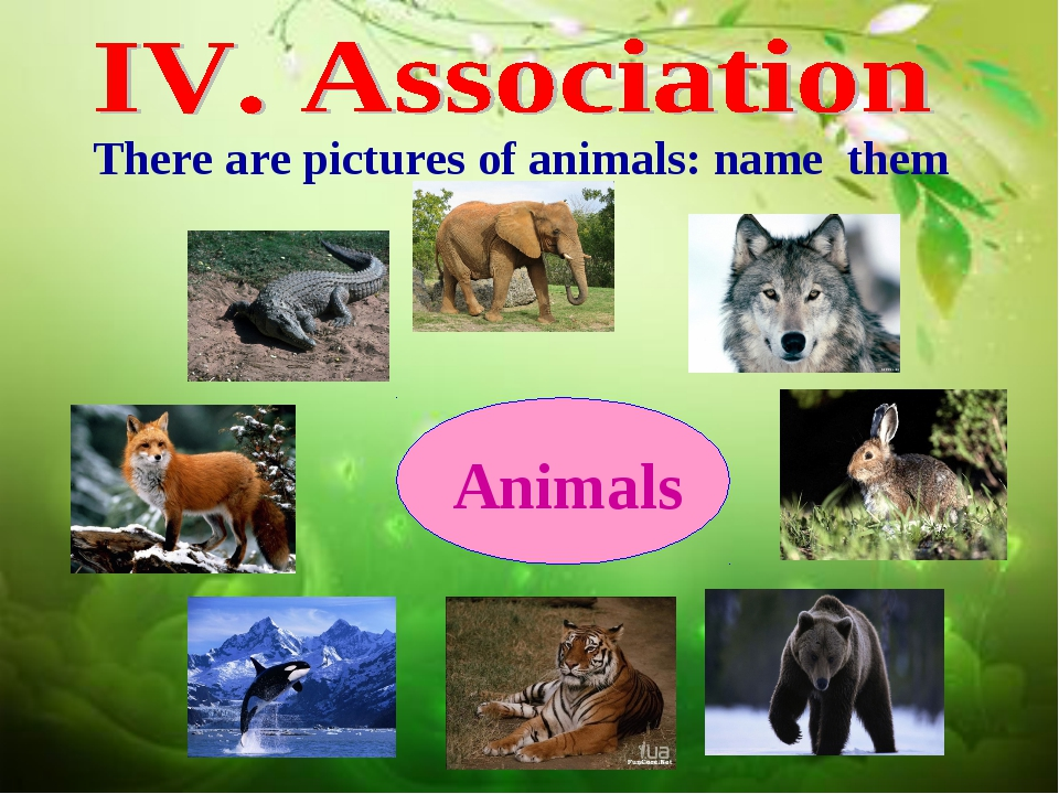 There are pictures of animals: name them Animals