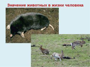 Значение животных в жизни человека +,-
