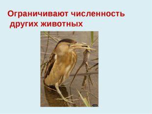Ограничивают численность других животных