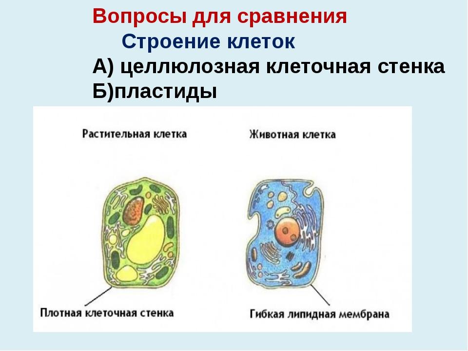 Вопросы для сравнения Строение клеток А) целлюлозная клеточная стенка Б)пласт...