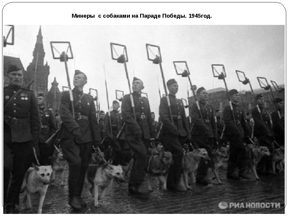 Минеры с собаками на Параде Победы. 1945год.