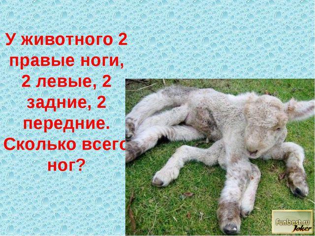 У животного 2 правые ноги, 2 левые, 2 задние, 2 передние. Сколько всего ног?