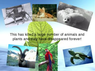 This has killed a large number of animals and plants and they have disappeare