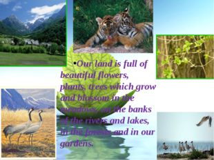Our land is full of beautiful flowers, plants, trees which grow and blossom i