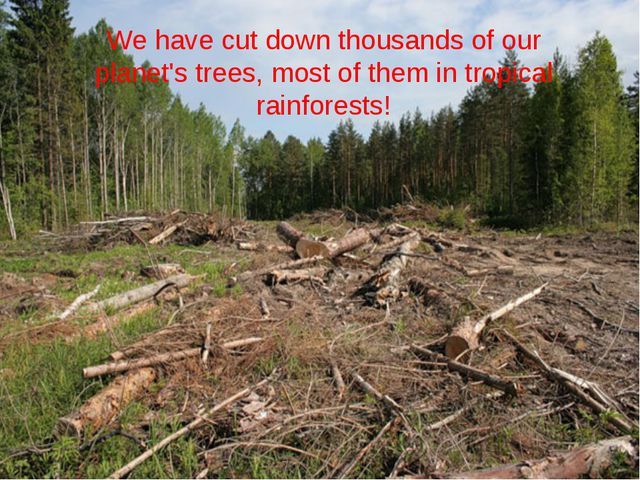 We have cut down thousands of our planet's trees, most of them in tropical ra...