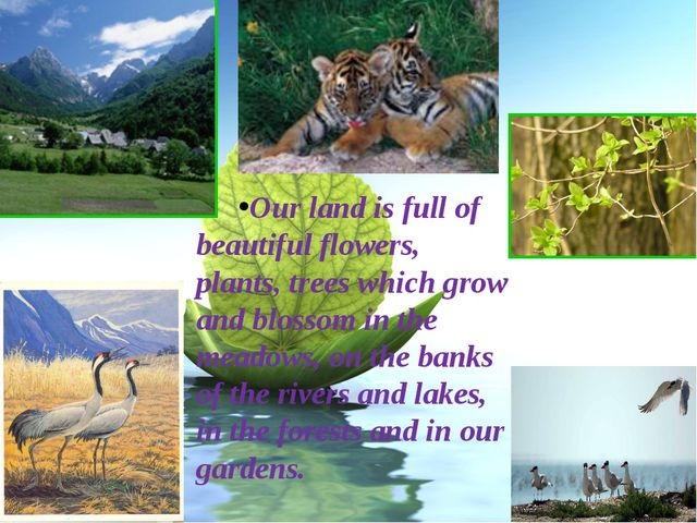 Our land is full of beautiful flowers, plants, trees which grow and blossom i...