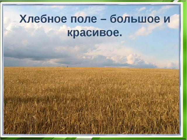 Хлебное поле – большое и красивое.