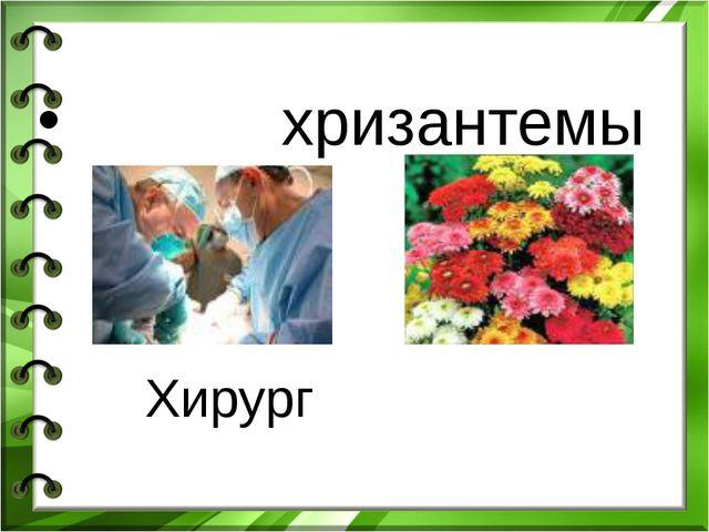 хризантемы Хирург