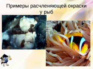 Примеры расчленяющей окраски у рыб
