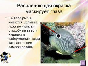 Расчленяющая окраска маскирует глаза На теле рыбы имеются большие ложные «гла