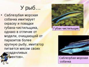 У рыб… Саблезубая морская собачка имитирует окраску и повадки губана-чистильщ