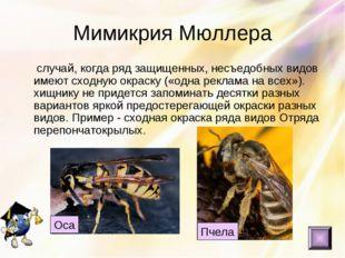Мимикрия Мюллера случай, когда ряд защищенных, несъедобных видов имеют сходну