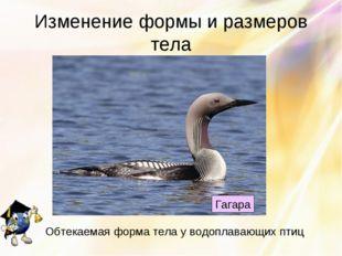 Изменение формы и размеров тела Гагара Обтекаемая форма тела у водоплавающих